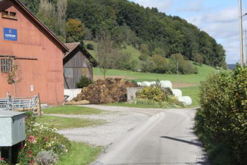 Tiere Ziegen +Kühe 2012 167