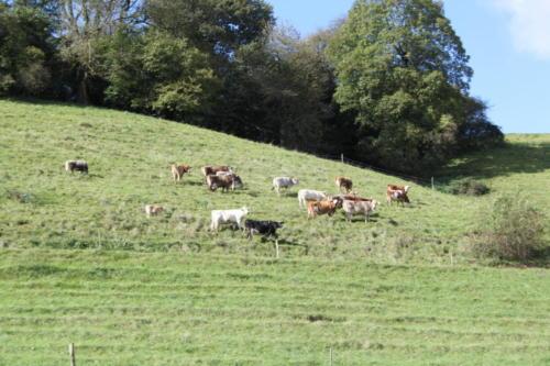 Tiere Ziegen +Kühe 2012 170